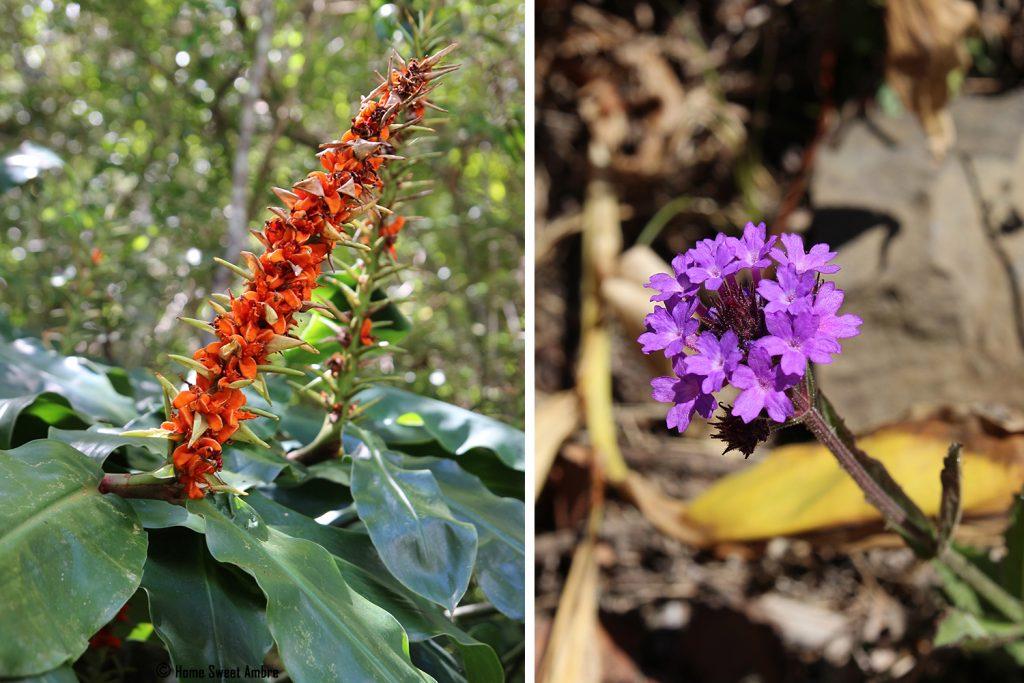 Fleurs La Réunion
