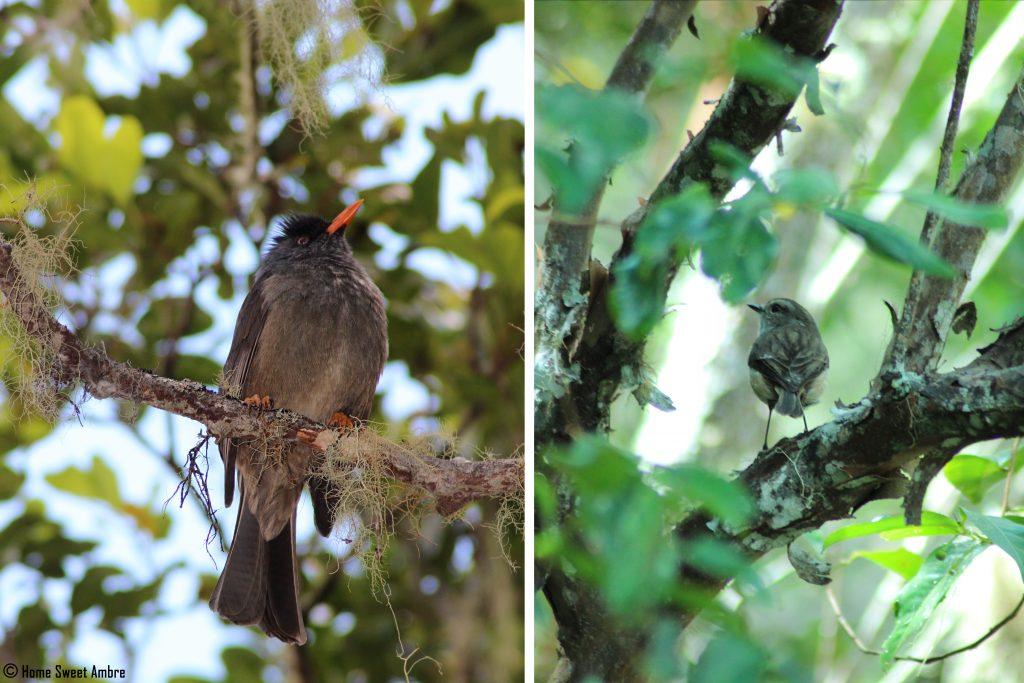 Oiseaux La Réunion