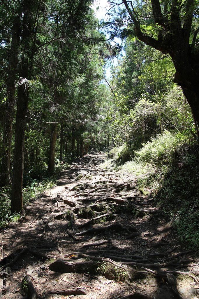 Départ de la randonnée la roche des merveilles à Cilaos