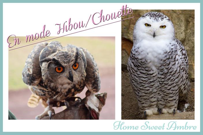 Hibou Ou Chouette chouette hibou : dessin en noir et blanc - home sweet ambre