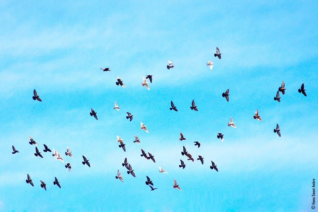 envol d'oiseaux - wild