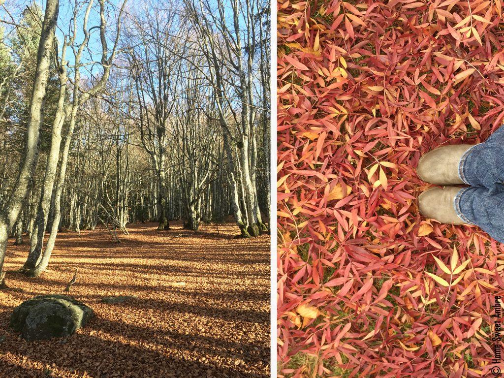 balades en forêt automne