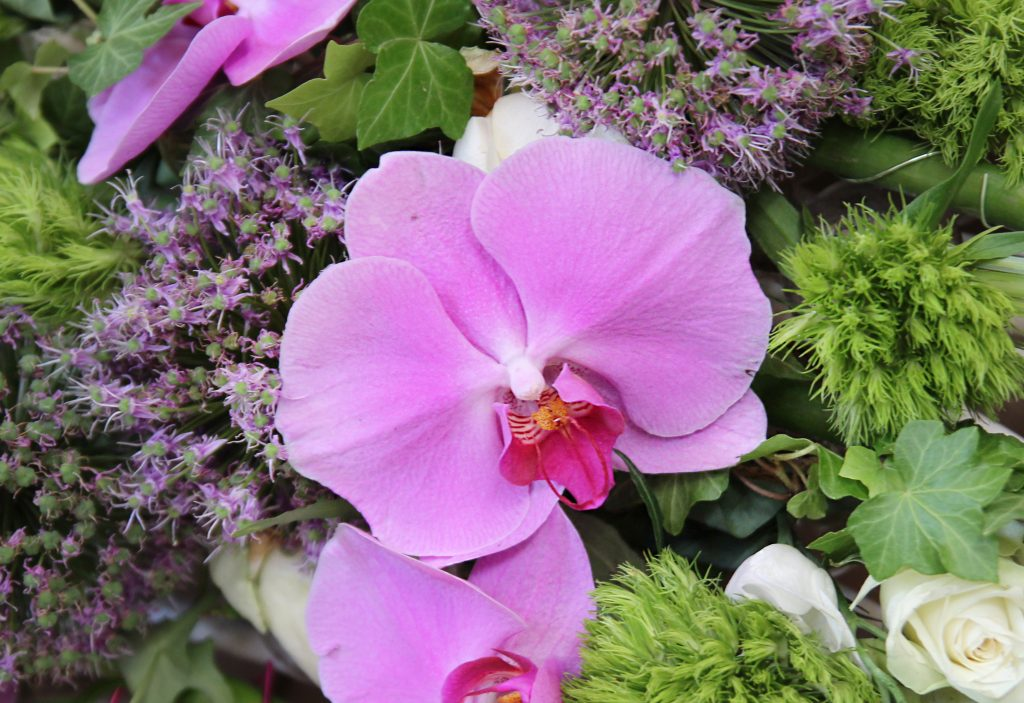 fleurs orchidées